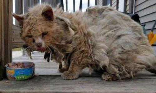 Pour que l'Etat prenne en charge les stérilisations et vaccinations des chats errants et aide toutes les petites associations de protection animale