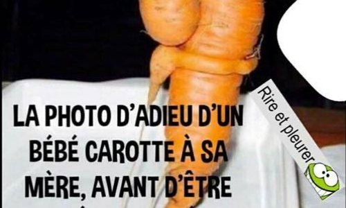 STOP aux massacres des carottes