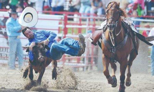 Non à toutes formes de maltraitance animale, non à l'utilisation de ceux-ci pour amuser les foules