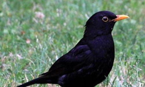 Stop à la chasse des oiseaux