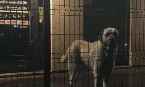 Venons en aide au chien de TABAPRIX Bouillon