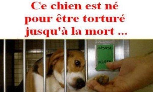 Téléthon stoppez vos expériences sur les chiens