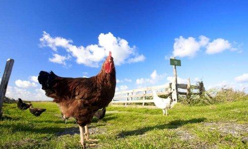 Pour que les grandes marques de distribution favorisent l'étiquetage des produits qui respectent le bien-être des animaux