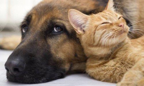 Pétition : Droit animalier dans les loyers