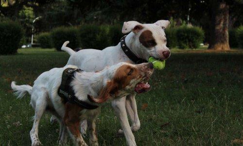 Pétition : Parc pour chien sécurisé à Villefranche-de-lauragais