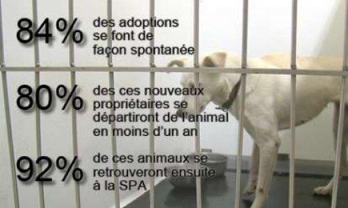 Stopper les groupes facebook de dons et ventes d'animaux hors-la-loi
