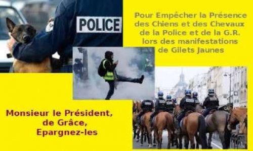 Pour Implorer le Président de la République d'épargner les Chevaux et les Chiens des manifs Gilets Jaunes
