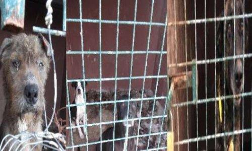 Pétition : Pour un traitement digne des chiens des installations de la mairie de Galdar
