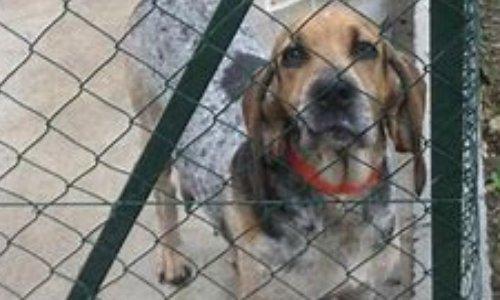 Demande de réglementation pour la détention des chiens de chasse