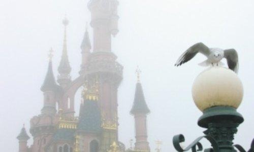Sauvons les Disney Mouettes