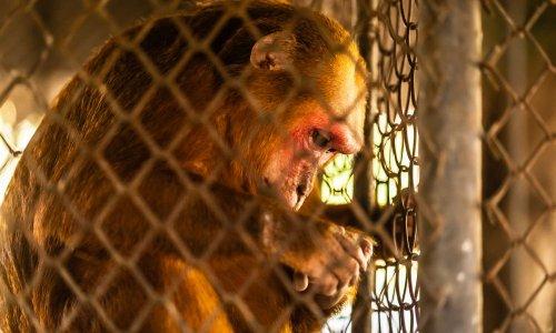 Relâcher les animaux en captivité en Thaïlande