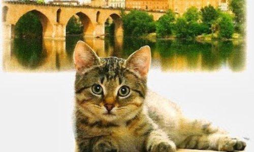 Montauban : première ville anti-chats de France !