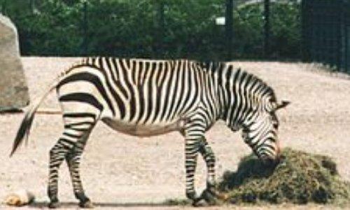 Plus d'animaux sauvages dans les cirques !