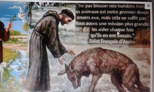 Pétition : STOP AUX EXPERIENCES EN LABORATOIRE FAITES SUR LES ANIMAUX
