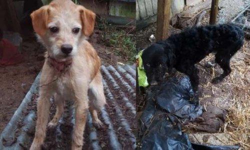 Peine de prison ferme pour l'individu ayant laissé mourir 4 chiens, 5 chats et 8 autres dans un état critique à Rethel