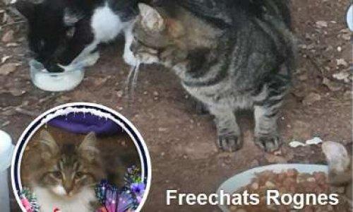 Protection des animaux sur la commune de Rognes 13840