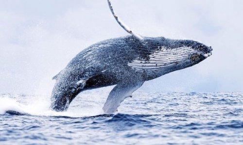 Pétition : Il faut sauver les baleines