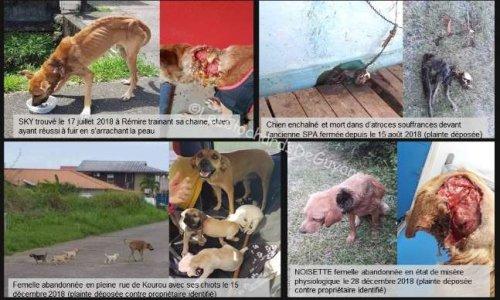 La protection de la vie, la sécurité et le bien-être des animaux