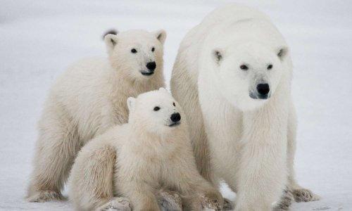 NON au regroupement d'animaux du grand froid au ZOO de BELGIQUE
