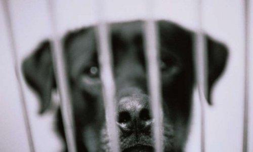 Halte aux maltraitance et abondon d'animaux