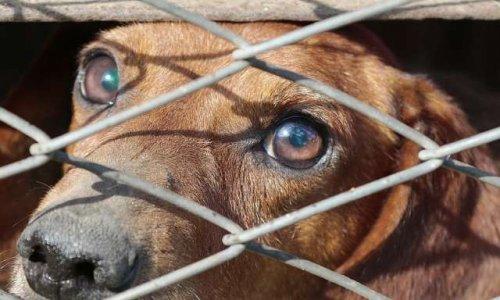 Non à la fermeture de la fourrière canine de Castelsarrasin-Moissac