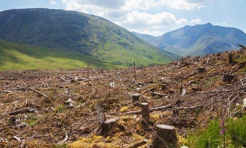 Pétition : Pour faire cesser la destruction des forêts tropicales !