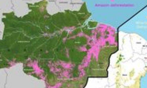 Pétition : Préservons la forêt Amazonienne, première forêt mondiale !