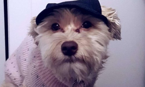 Se promener avec son chien dans un centre d'achat avec un poussette pour chien, pour une personnes invalide