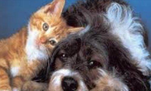 interdire la vente d'animaux chez les particuliers