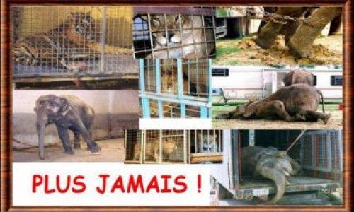 Pour l'interdiction d'animaux dans le Cirque de Venise !