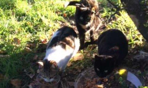 Marseille : sauvons nos chats errants