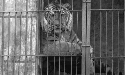 Pétition : Non aux cirques avec animaux dans la ville de Dole