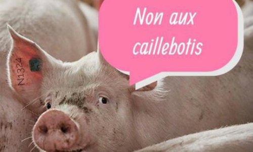 NON à l'élevage intensif de porcs à la ferme du Rouvel de Neuville 63160