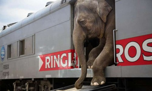NON aux cirques avec animaux à AUTUN