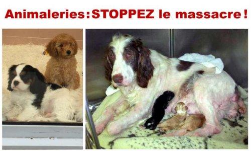 Pétition : Pour interdire la vente de chiots, chatons et NACs en animalerie