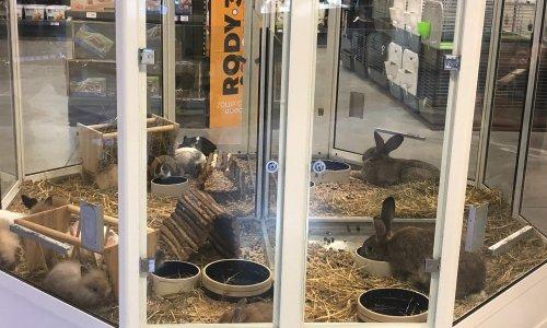 Pour l'arrêt TOTAL des ventes de lapins, furets et poissons en animalerie !