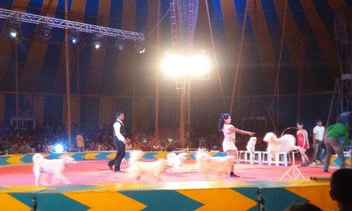 Non à l'usage des animaux dans les cirques