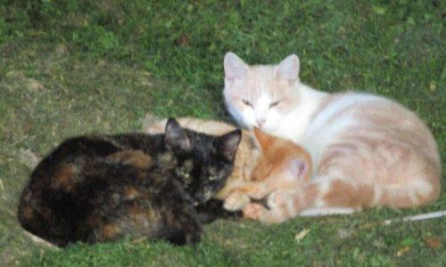 Stérilisation gratuite des chats