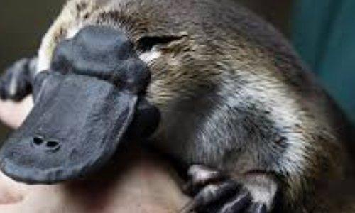 Proyecto Orniparques para proteger une especie en péligro de extincion