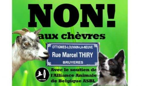 Non aux chèvres à la rue Marcel Thiry! Créons un espace pour nos chiens!