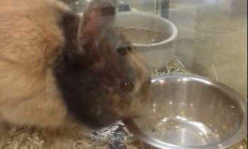 Pour de meilleures conditions de vies des animaux proposés à la vente dans un magasin près de Lyon
