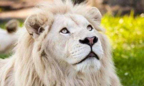 Pétition : Non aux cirques avec animaux à St-Paul de la Réunion