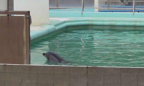 Pétition pour sauver Honey, un dauphin abandonné ainsi que d'autres animaux dans un parc au Japon