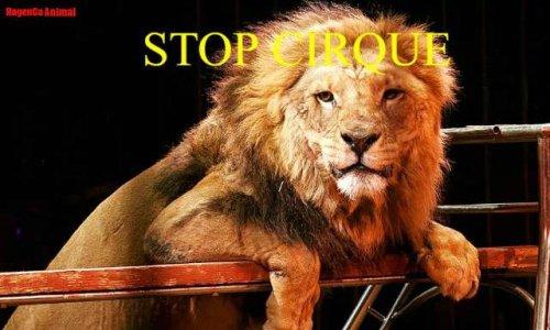 100 mille signatures, pour l'interdiction totale des animaux sauvages dans les cirques