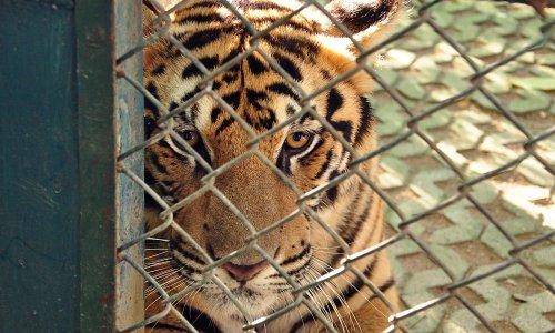 Stop au commerce d'animaux sauvages !