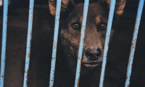 Non à l'euthanasie abusive des animaux !