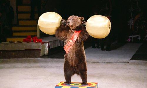 Pas de cirque avec animaux à Saint-Malo