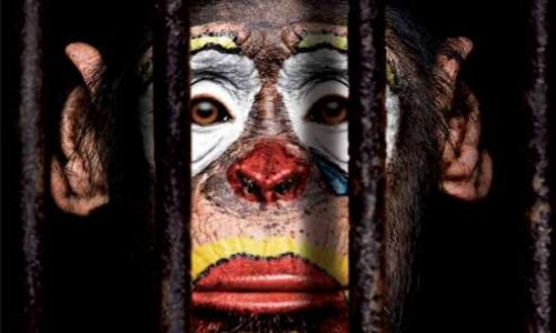 Non aux cirques avec animaux à Troyes (10)