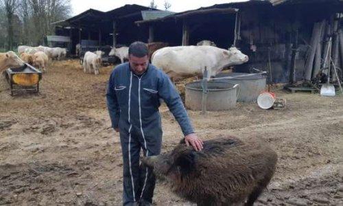 Respectons le liens entre les animaux et l'homme
