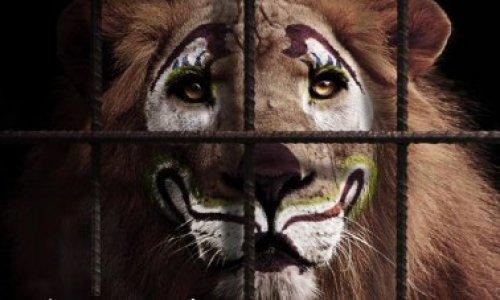 Pétition : Non aux cirques animaliers à Chelles